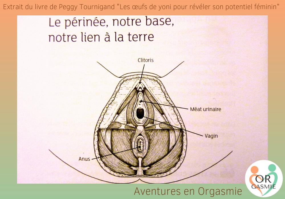 """livre """"Les oeuf de yoni pour révéler son potentiel féminin"""", schéma du périnée, musculature, plancher pelvien"""