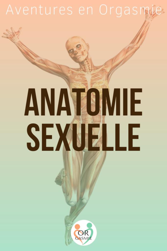 Femme transparente : on voit ses muscles et ses cellules graisseuses, anatomie sexuelle