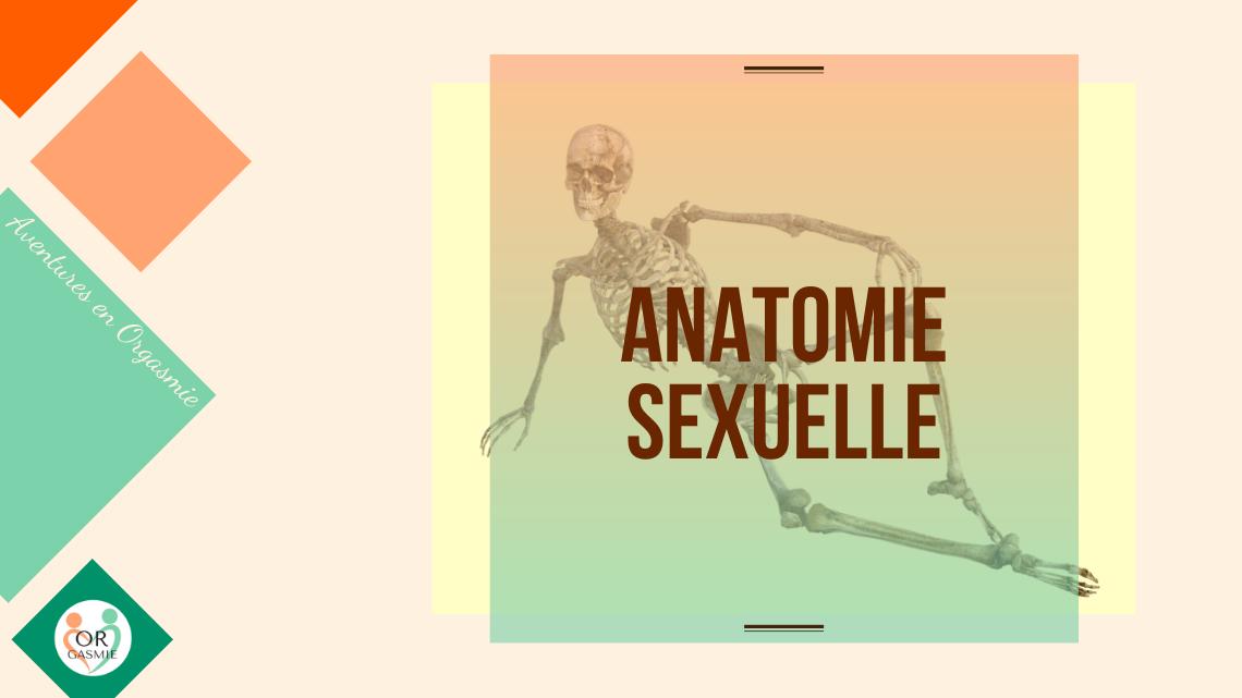 Anatomie sexuelle : squelette heureux, clitoris, verge, corps caverneux, prostate