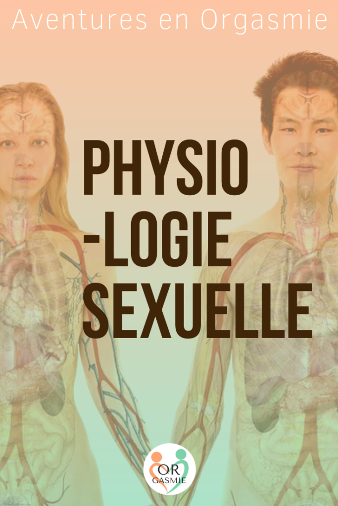 Couple nu : on voit leurs vaisseaux sanguins, squelette, organes, physiologie sexuelle, fonctionnement du corps humain