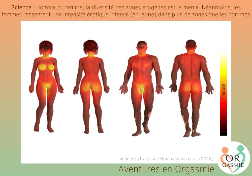 Science : Homme ou femme, la diversité des zones érogènes est la même. Néanmoins, les femmes ressentent une intensité érotique intense (en jaune) dans plus de zones que les hommes